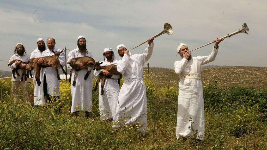 Happy Passover Sacrifice, Story