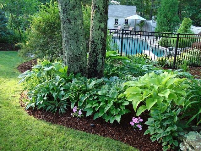 Amazing Front Yard Landscaping Idea