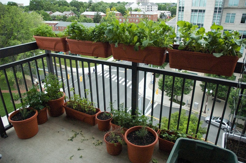Balcony Garden Best Idea