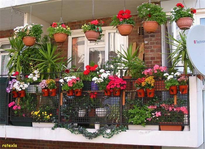 Best Balcony Garden Image