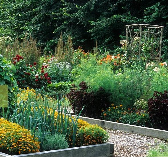 Best Garden Image And Picture