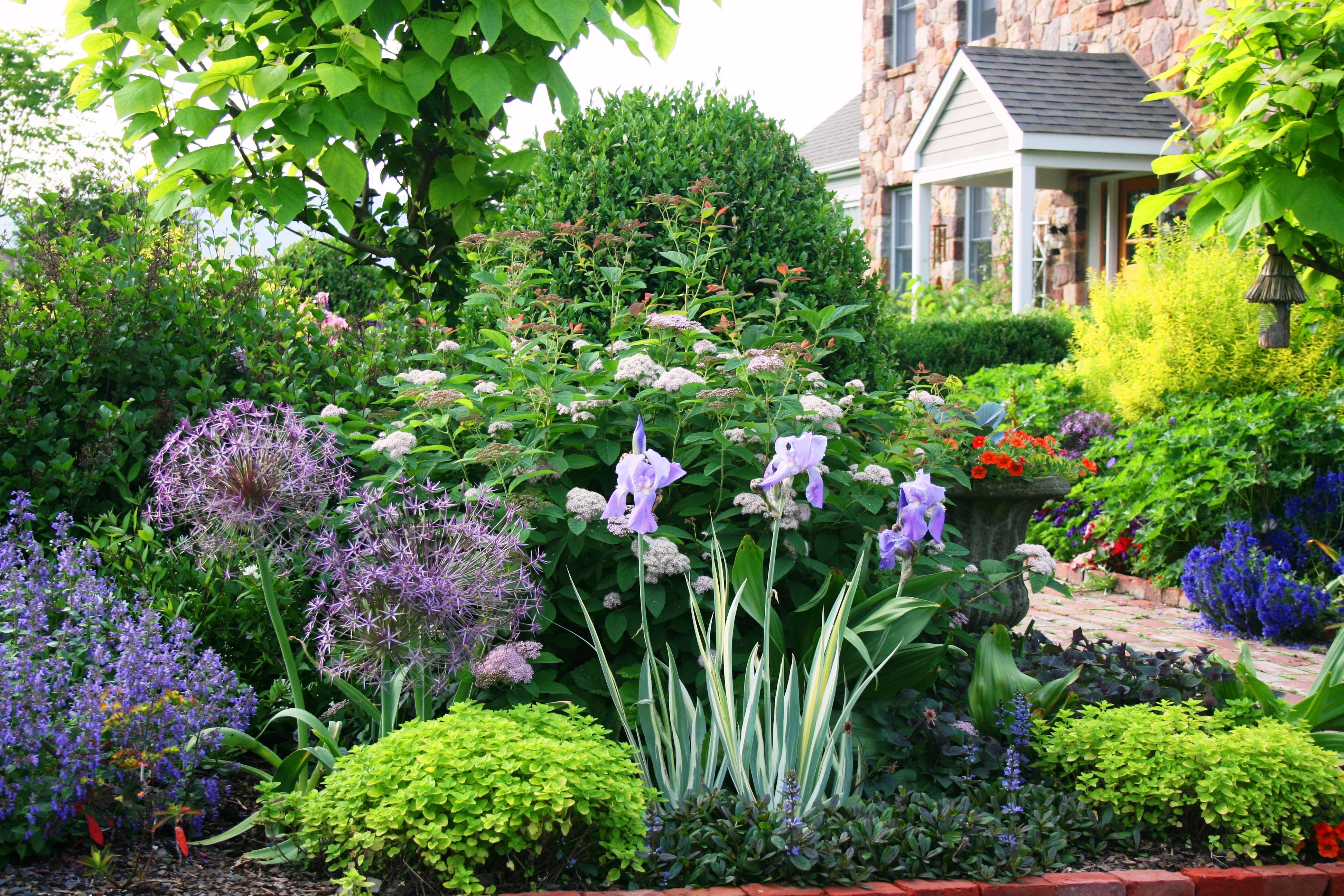 Best Garden Plant