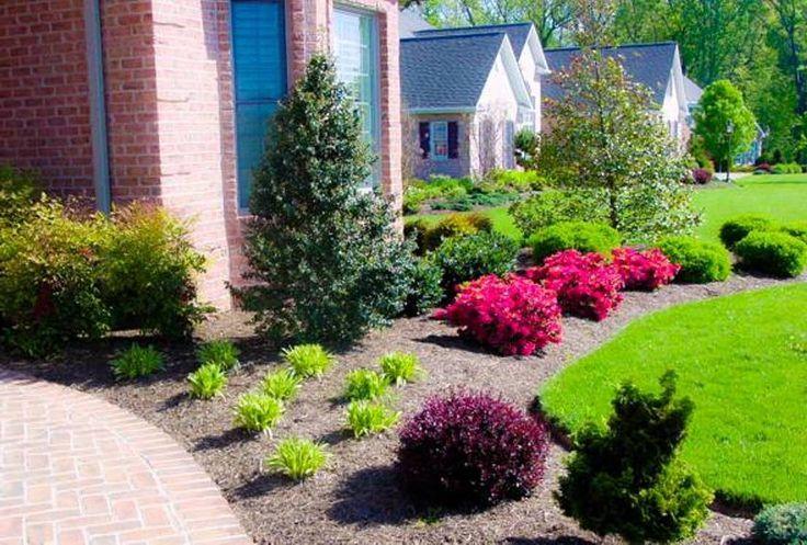 Best Landscaping Plant