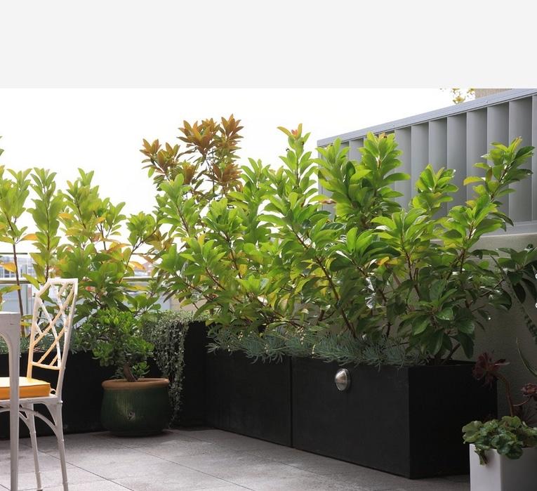 Download Balcony Garden Idea