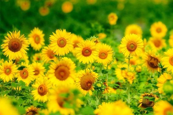 Flowering Plant Image
