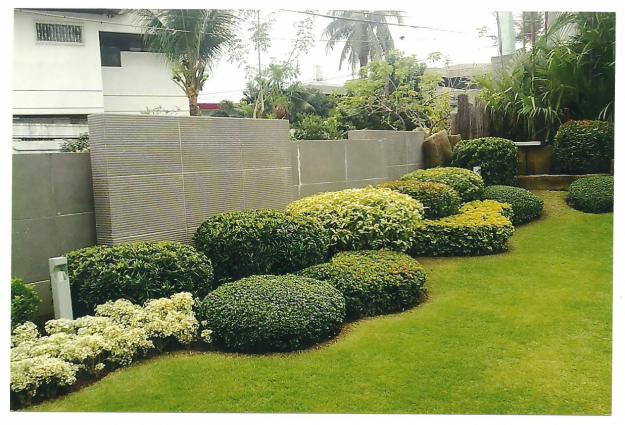 Landscaping Plant Download