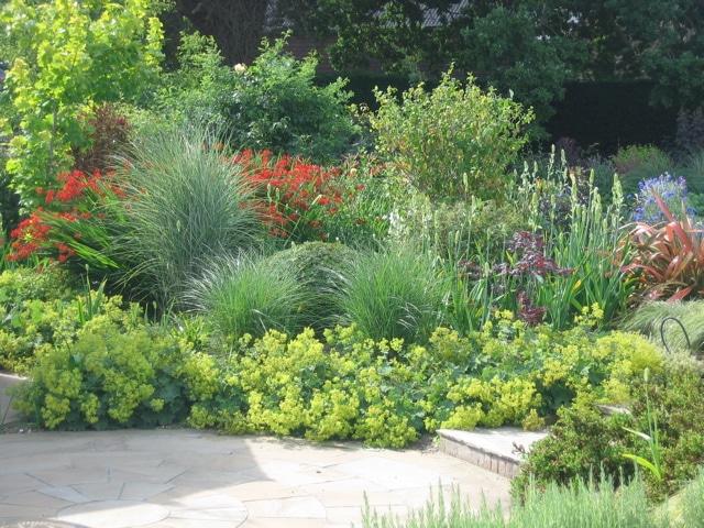 Landscaping Plant Idea