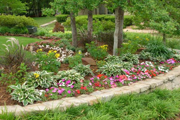 Landscaping Plant Picture