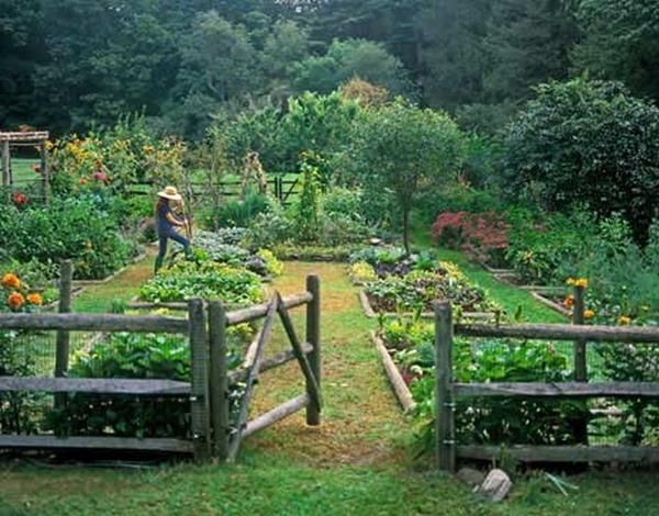 New Garden Image And Picture