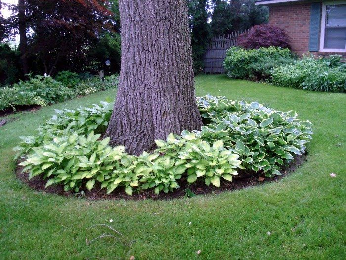 Online Front Yard Landscaping Idea