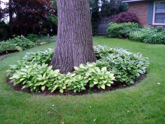 Online Front Yard Landscaping Idea