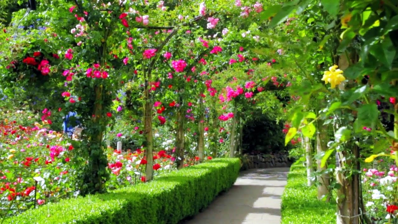 Online Garden Image And Picture