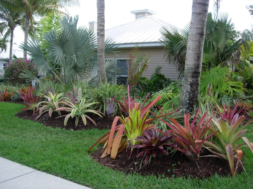 Online Landscaping Plant