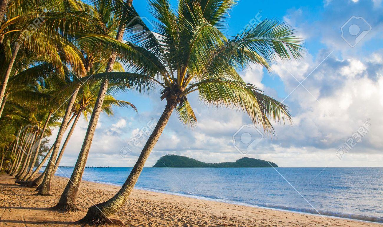 Tropical Landscape Layout