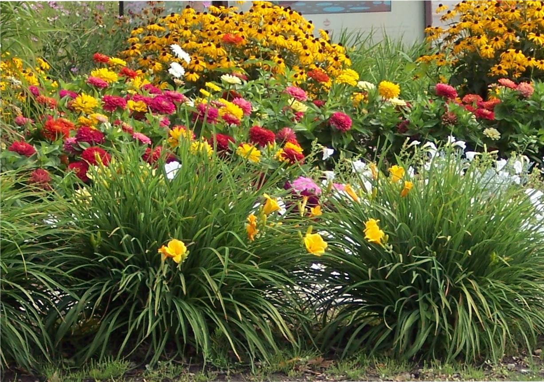Unique Landscaping Plant
