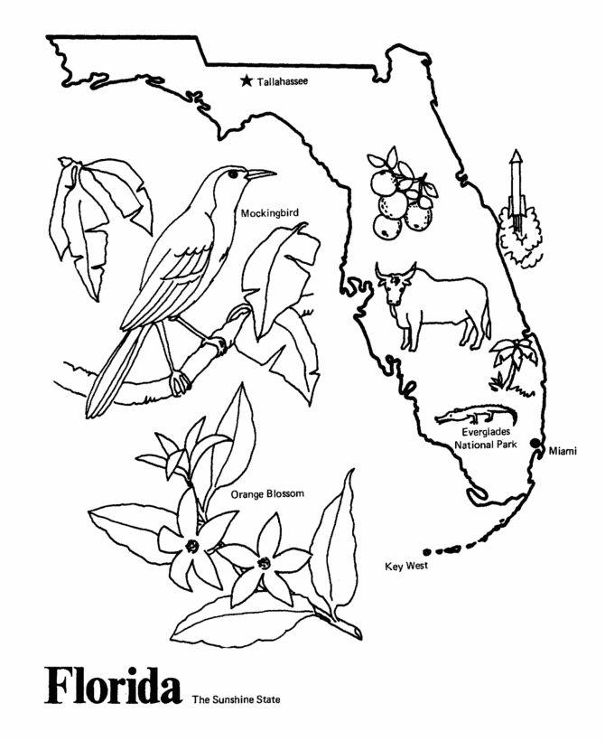 Map of Florida Drawing