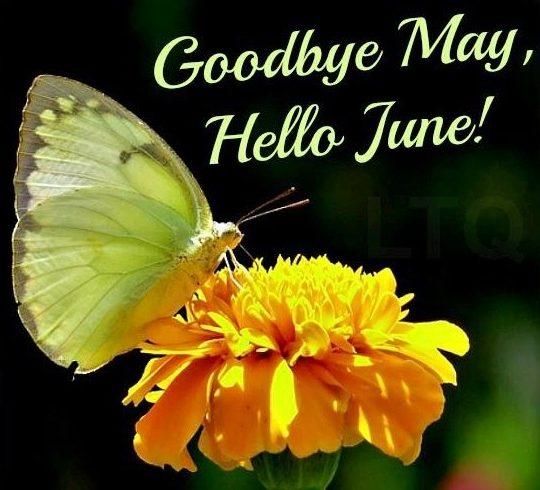 Good Bye June Hello June Wallpaper