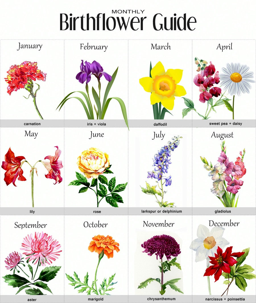 Birthflower Images