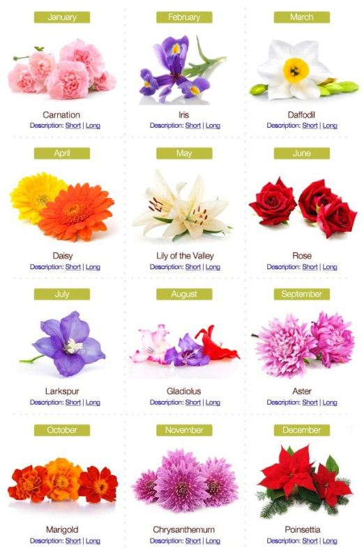 Birth Flower December
