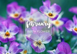 Hello February Birthflower Month