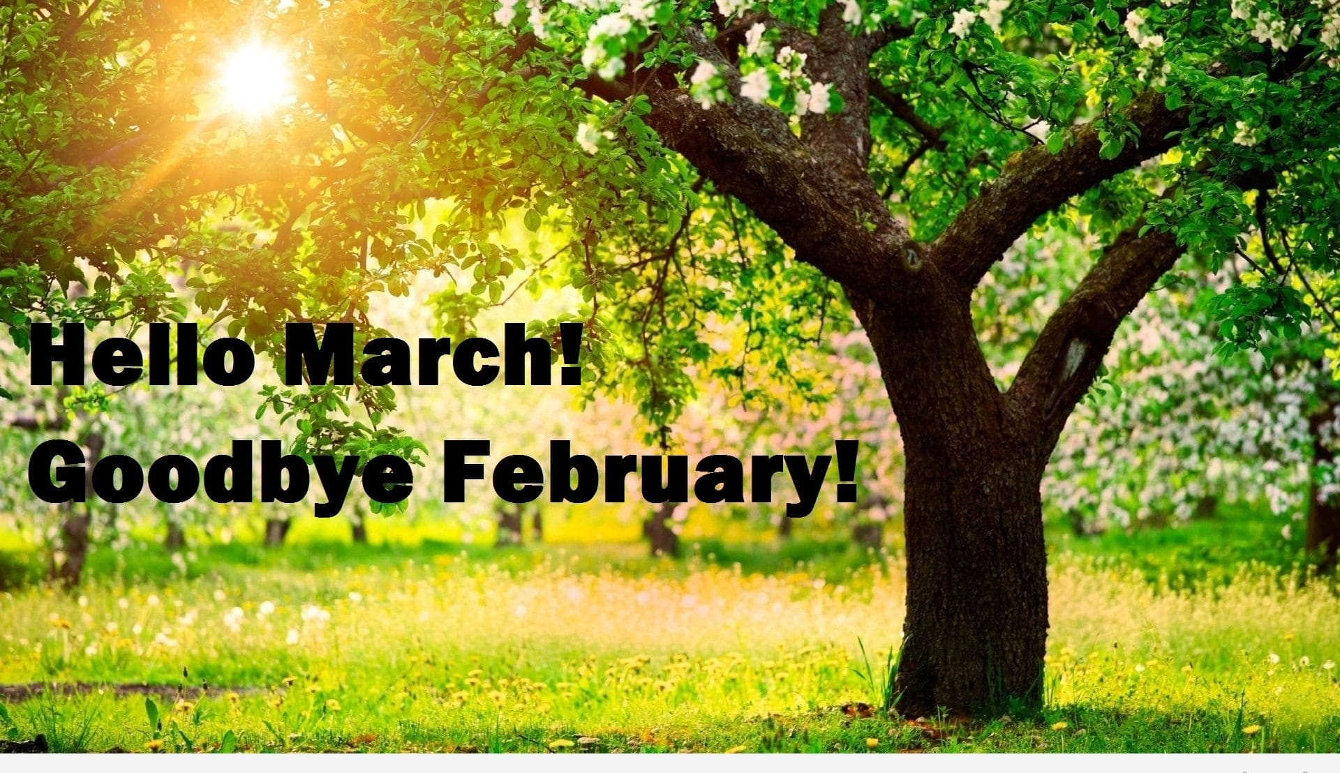 Hello March Goodbye February Quotes Template