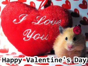 Valentine's Day Shayari For Girlfriend