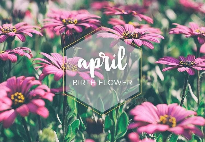 April Birth Flower