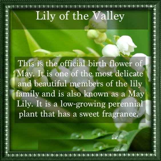 Birth Flower May Quotes