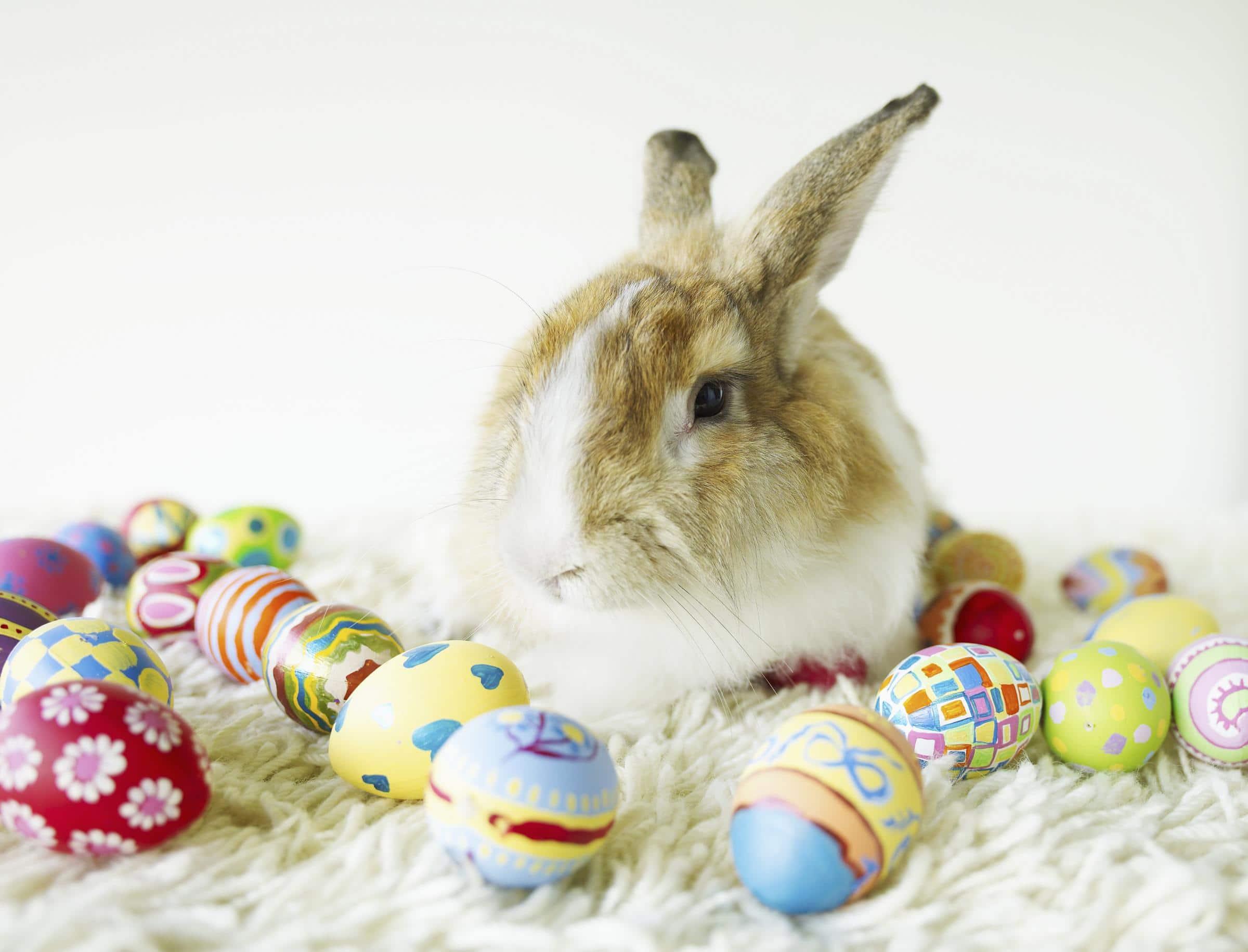 Easter Bunny Jokes