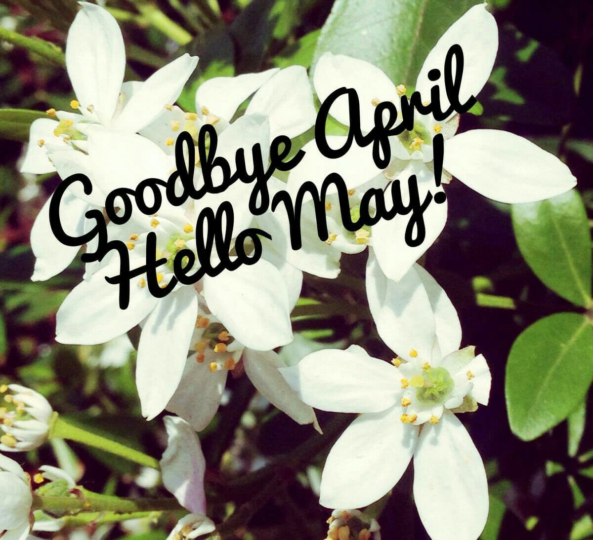 Goodbye April Hello March