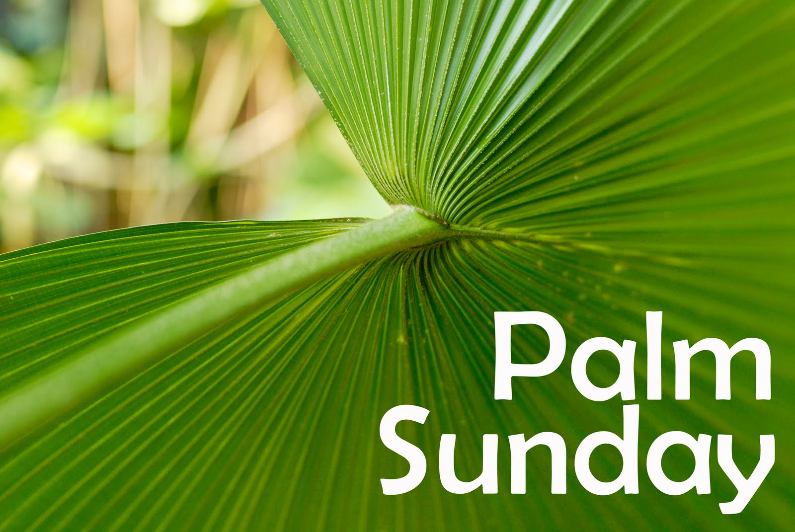 Palm Sunday Craft