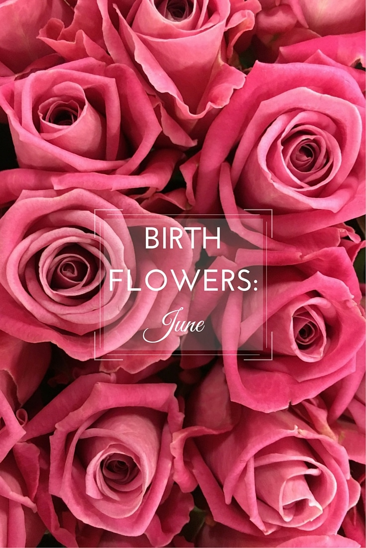 June Birth Flower Background Free Hd Images