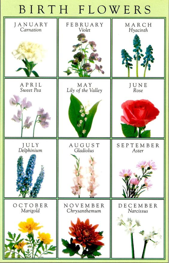 July Birth Flower