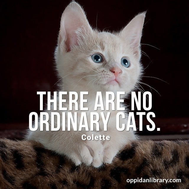 THERE ARE NO ORDINARY CATS. COLETTE