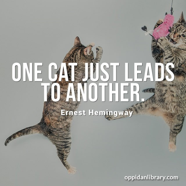 ONE CAT JUST LEADS TO ANOTHER. ERNEST HEMINGWAY