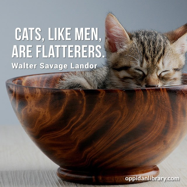 CATS, LIKE MEN, ARE FLATTERERS. WALTER SAVAGE LANDOR