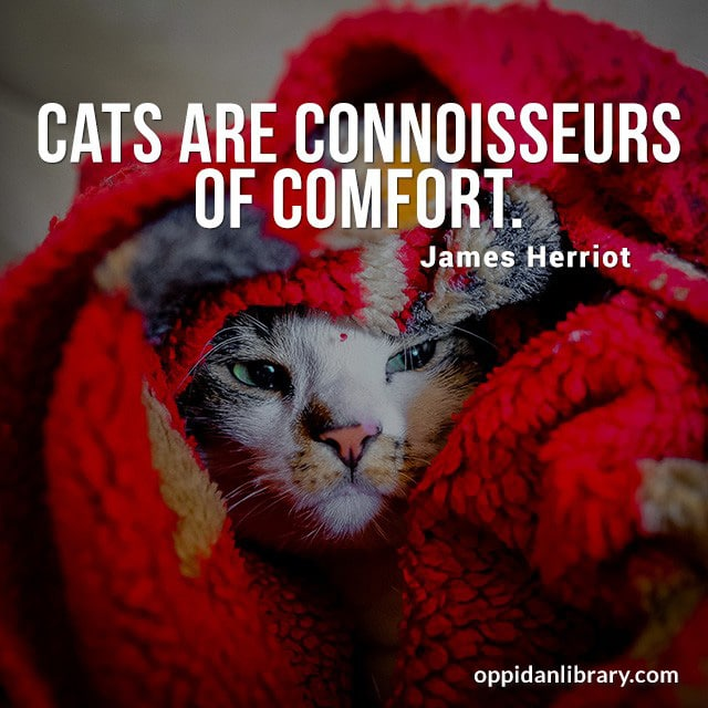 CATS ARE CONNOISSEURS OF COMFORT. JAMES HERRIOT