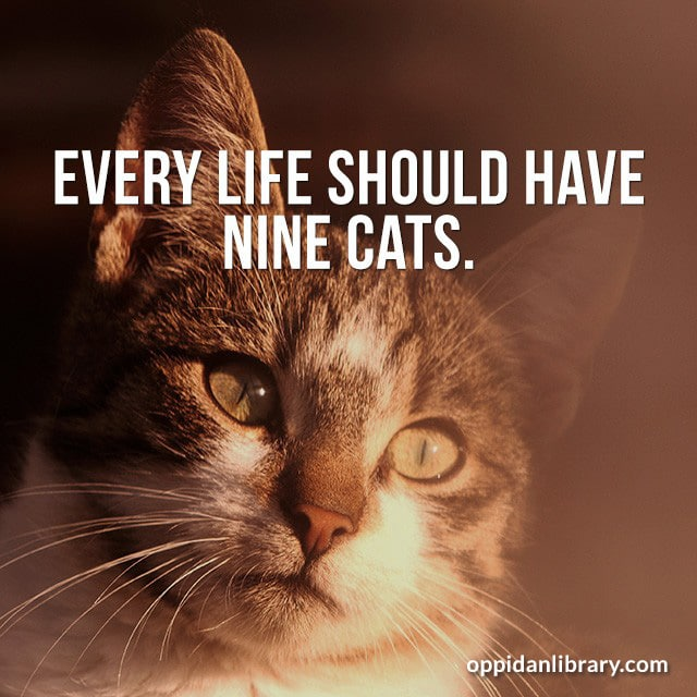 EVERY LIFE SHOULD HAVE NINE CATS.