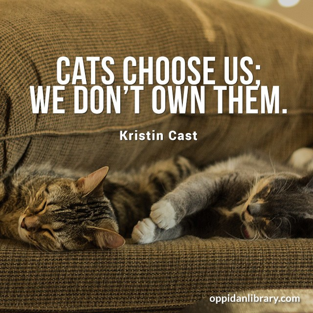 CATS CHOOSE US; WE DON'T OWN THEM. KRISTIN CAST