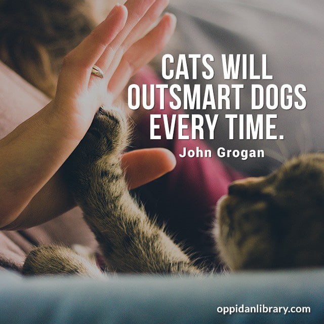 CATS WILL OUTSMART DOGS EVERY TIME. JOHN GROGAN