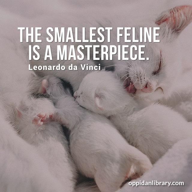 THE SMALLEST FELINE IS A MASTERPIECE. LEONARDO DA VINCI