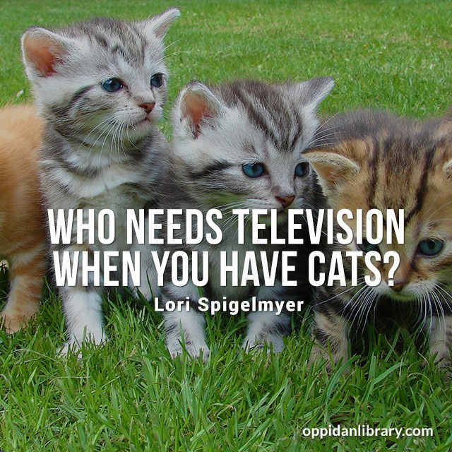 WHO NEEDS TELEVISION WHEN YOU HAVE CATS? LORI SPIGELMYER