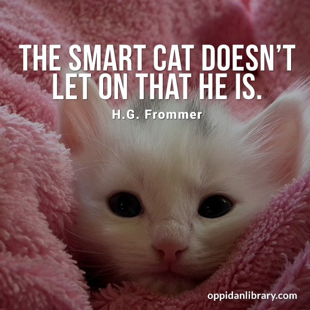 THE SMART CAT DOESN'T LET ON THAT HE IS. H. G. FROMMER