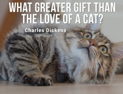 Cat Quote images for Instagram and Whatsapp