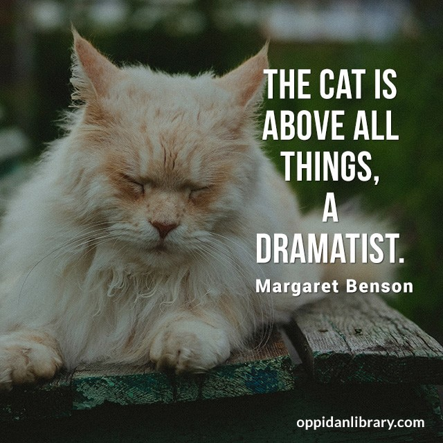 THE CAT IS ABOVE ALL THINGS, A DRAMATIST. MARGARET ENSON
