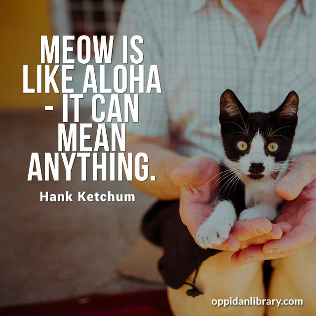 MEOW IS LIKE ALOHA - IT CAN MEAN ANYTHING. HANK KETCHUM