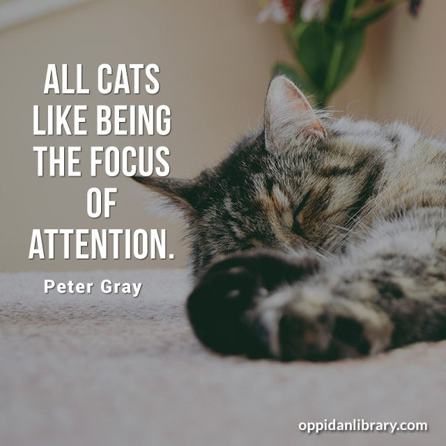 ALL CATS LIKE BEING THE FOCUS OF ATTENTION. PETER GRAY