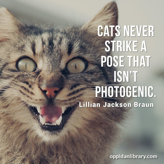 CATS NEVER STRIKE A POSE THAT ISN'T PHOTOGENIC. LILLIAN JACKSON BRAUN