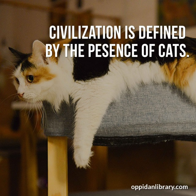 CIVILIZATION IS DEFINED BY THE PRESENCE OF CATS.