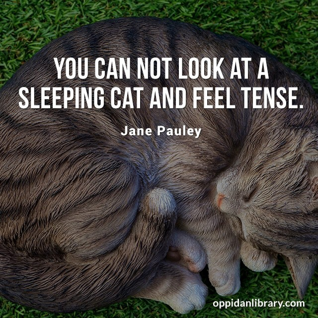 YOU CAN NOT LOOK AR A SLEEPING CAT AND FEEL TENSE. JANE PAULEY